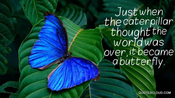 just-when-caterpillar-thought-the-world-was-over